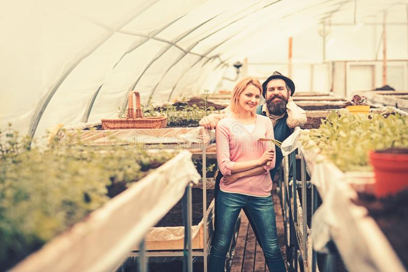 Happy couple working in green house. Smiling blond woman holding hand fork and bearded man in hat standing between rows stock images