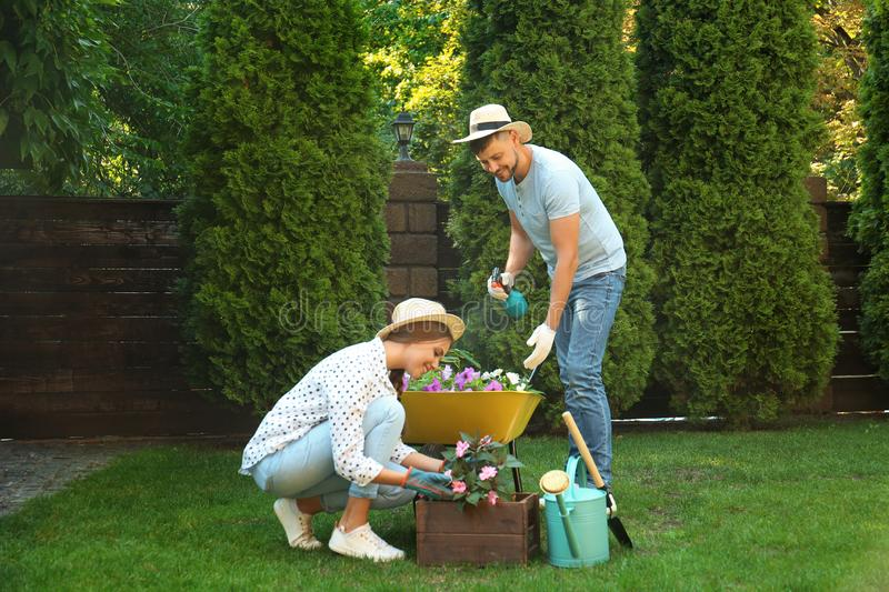 Happy couple working together in garden royalty free stock images
