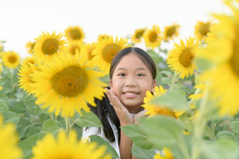 Happy cute asian girl smile with sunflower royalty free stock photo