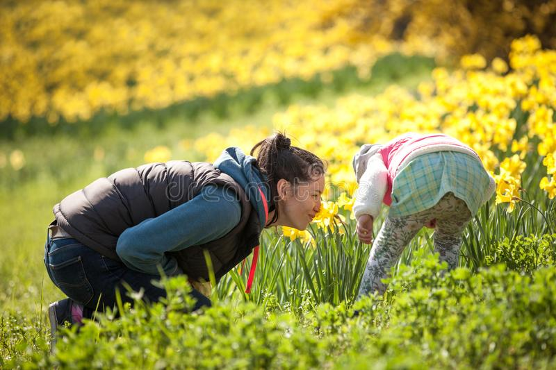 Happy cute and beautiful child having fun with mother in yellow flowers in spring in park, cheerful holidays outdoors, healthy lif stock photo