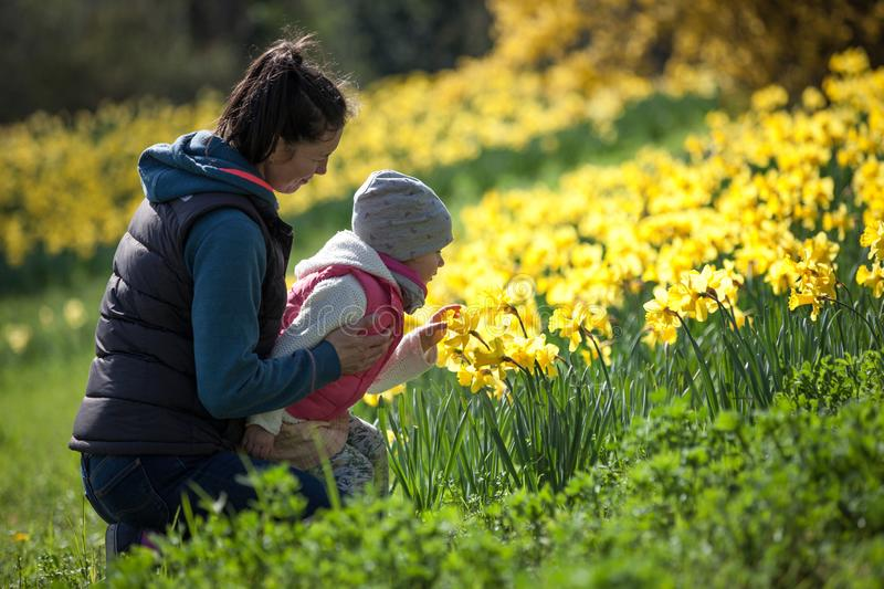 Happy cute and beautiful child having fun with mother in yellow flowers in spring in park, cheerful holidays outdoors, healthy lif. Estyle, loving family royalty free stock photo