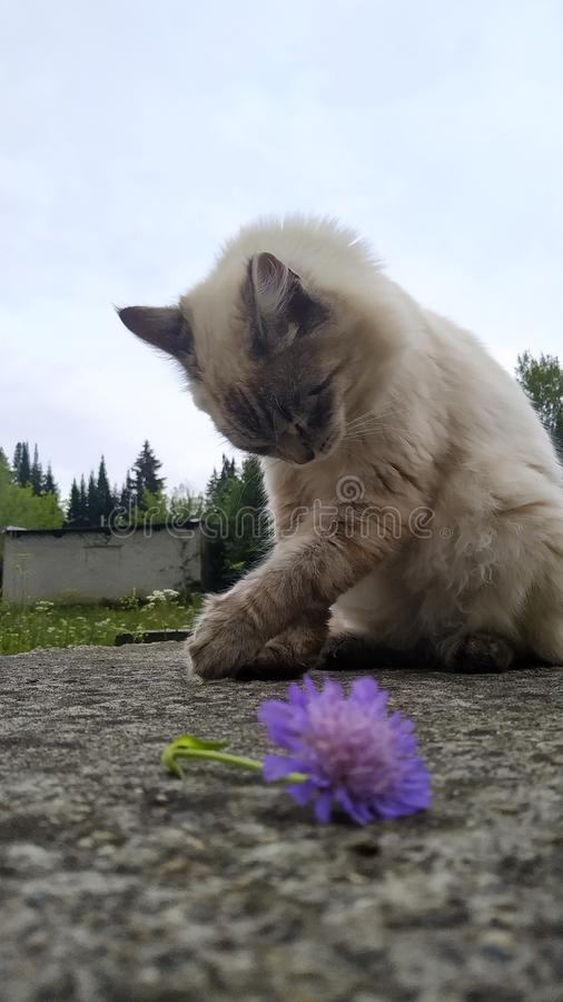 Happy cute cat and flower stock photo