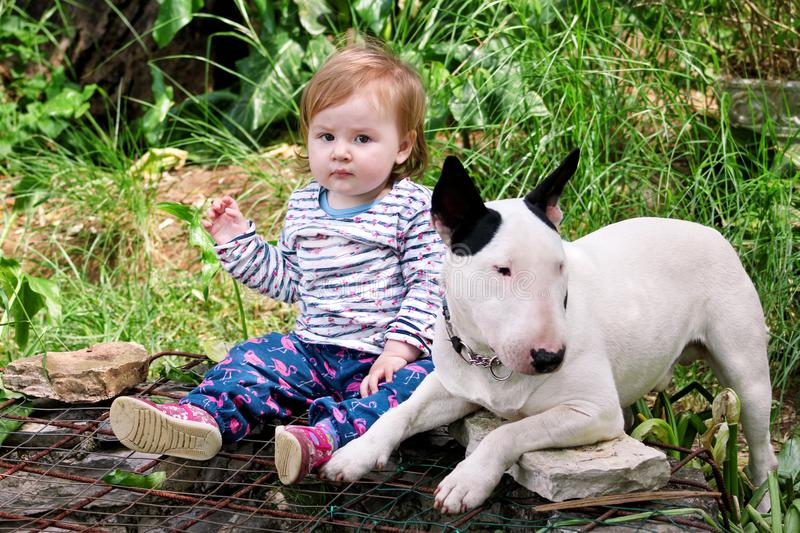 Happy cute female baby and dog is sitting in garden. Child is playing with English Bull Terrier white dog outside in park. stock photos