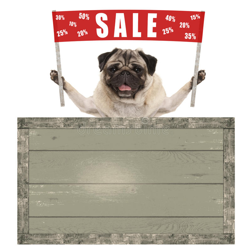 Happy cute pug puppy dog holding up red banner sign with text sale % off, with vintage wooden board royalty free stock photos