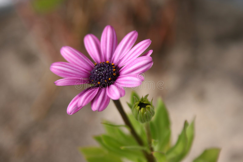 Download Happy daisy stock photo. Image of nature, daisies, plants - 6507774