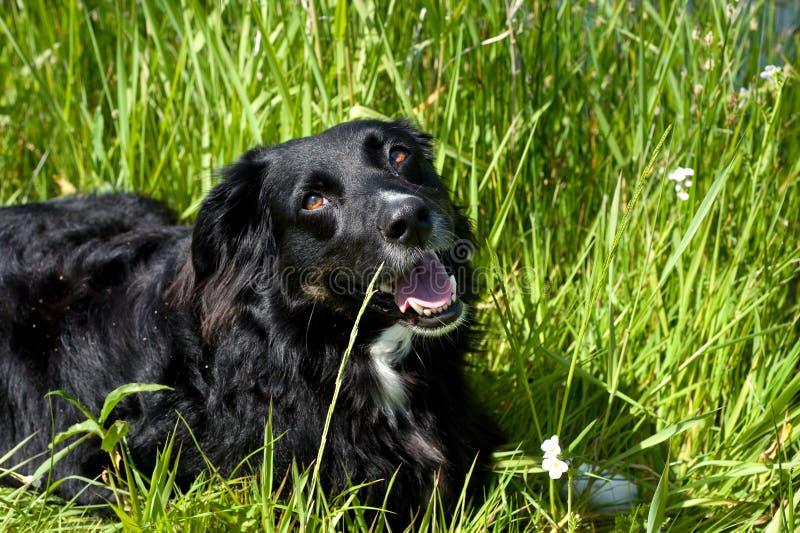 Download Happy Dog Stock Image - Image: 10063571