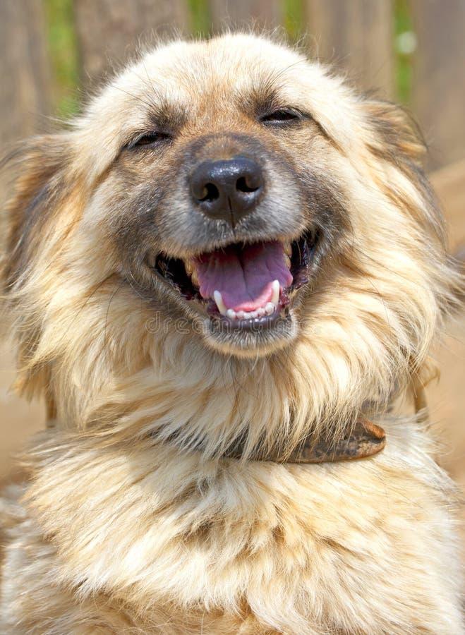 Free Happy Dog Stock Photos - 25459383