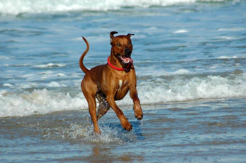 Happy dog stock photo