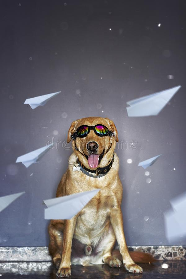 HAPPY DOG WITH AVIATOR GLASSES stock photography