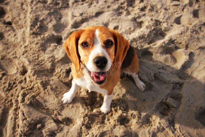A happy dog stock photo