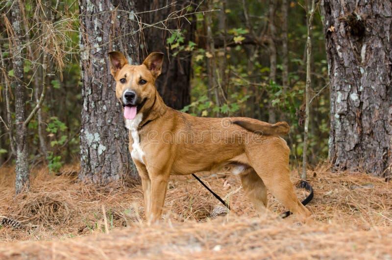 Happy Dog Border Collie Shepherd Mixed Breed stock photos