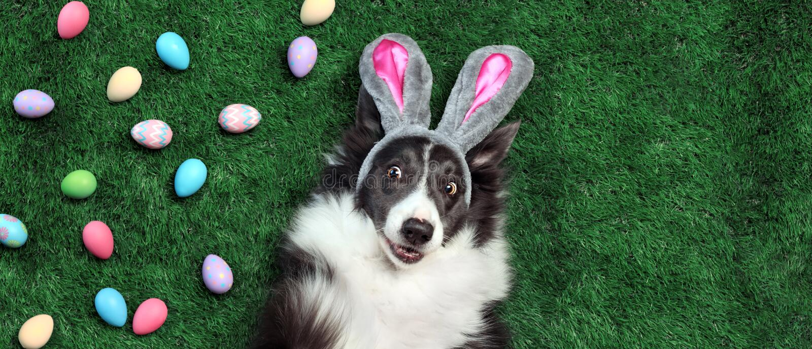 Dog with bunny ears surrounded by Easter eggs. Happy dog with bunny ears surrounded by Easter eggs royalty free stock photos