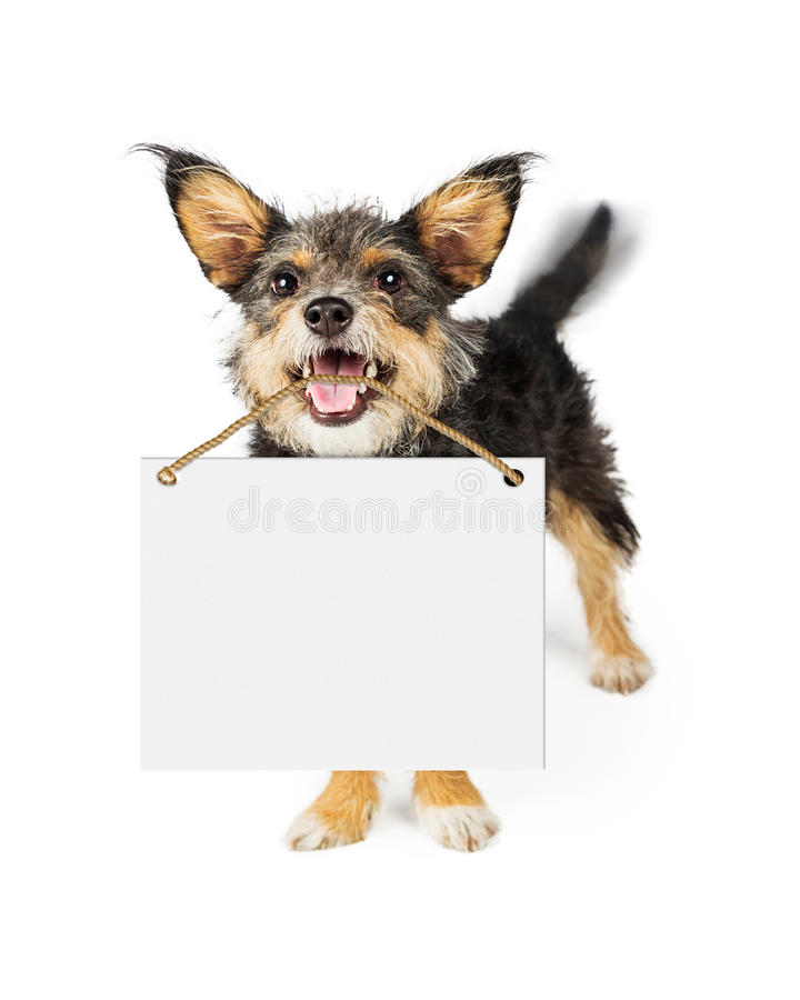 Happy Dog Carrying Blank Sign stock images