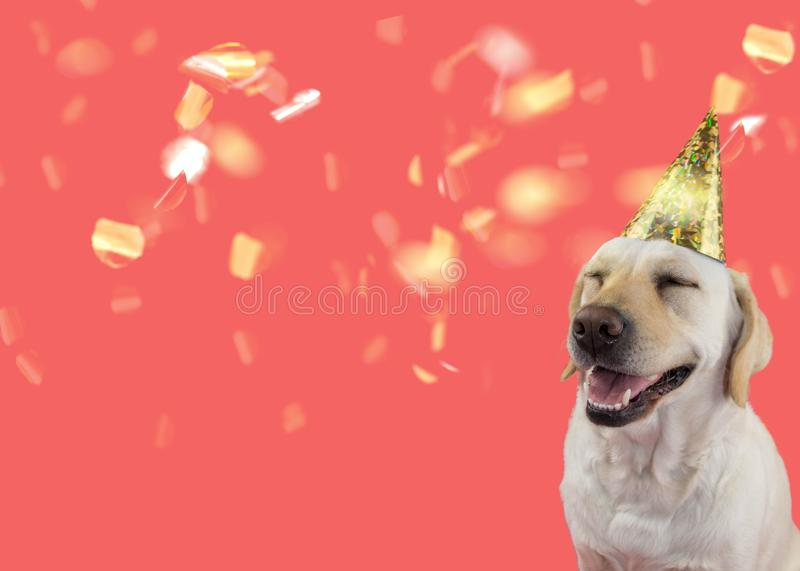 HAPPY DOG CELEBRATING A BIRTHDAY OR NEW YEAR PARTY, ISOLATED SHOT AGAINST CORAL TREND BACKGROUND royalty free stock photo