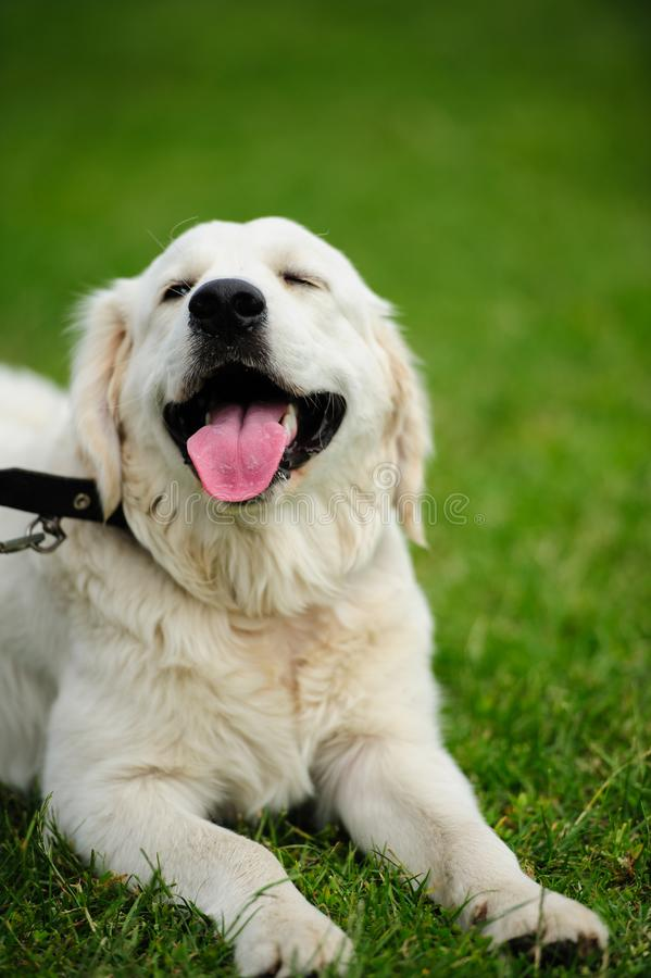 happy dog  on a green grass stock images