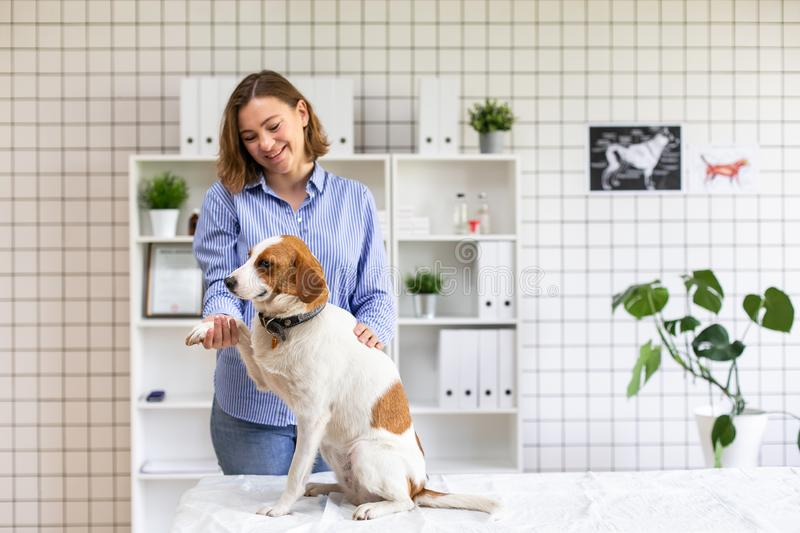 Happy dog with its owner in a veterinary clinic at the doctor`s office. Close up. Soft focus. Happy dog with its owner in a veterinary clinic at the doctor`s stock photos