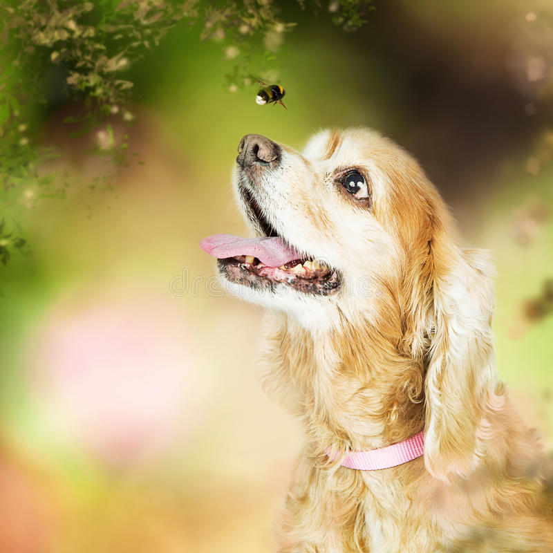 Happy Dog Outdoors Looking at Bee royalty free stock image