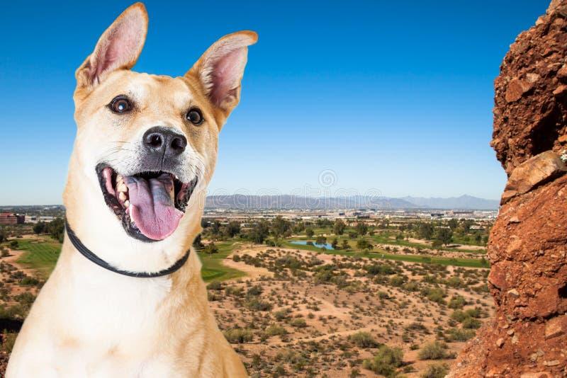 Happy Dog Overlooking Phoenix Arizona. Active dog outdoors overlooking a scenic view of Phoenix, Arizona from Papago Park royalty free stock photos