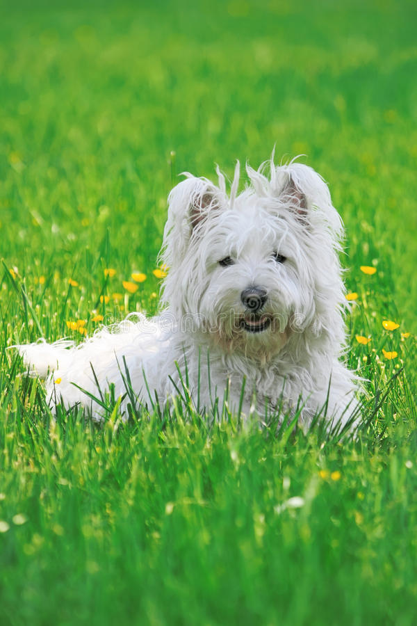 Happy Dog in a Park royalty free stock photo