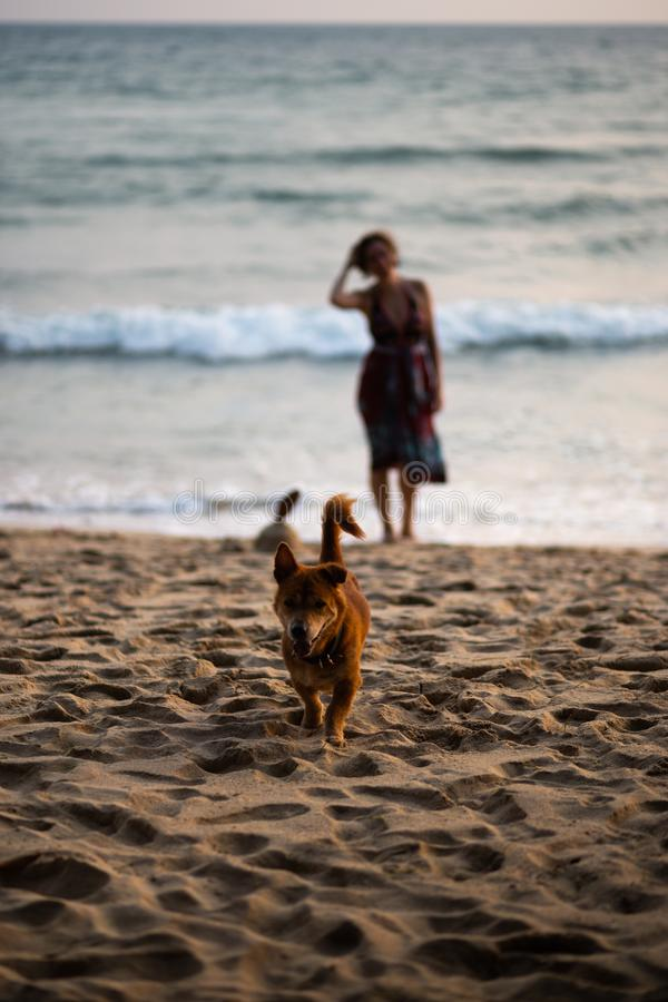 Happy dog running towards owner with a woman in a colorful dress in the background. Thailand Ko Chang stock photography