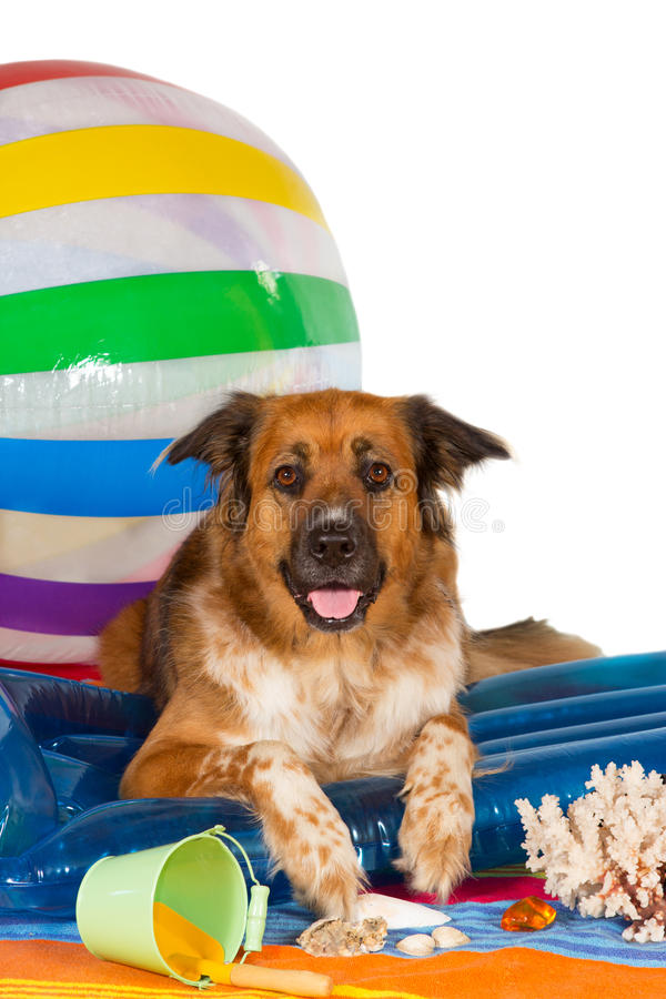 Download Happy dog at the seaside stock photo. Image of coral - 26192194