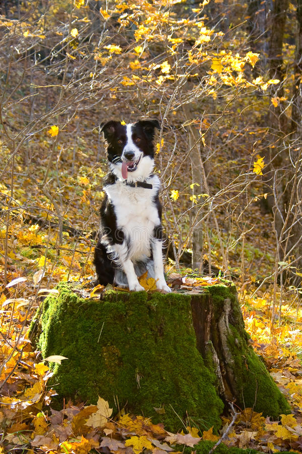 Happy dog in the woods. stock images