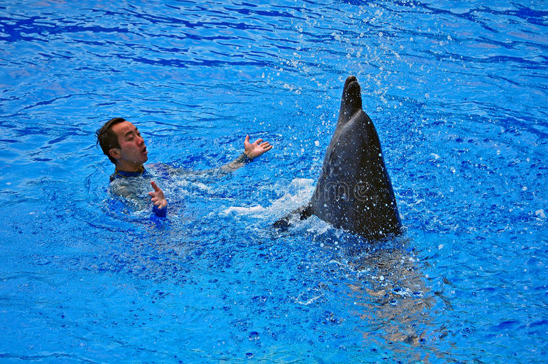 Download Happy Dolphin And Trainer Editorial Stock Image - Image: 21811889