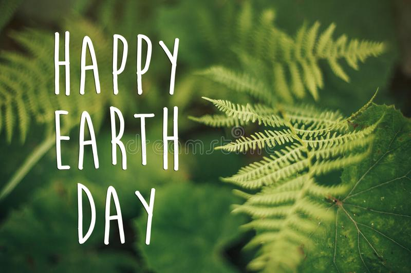 Happy earth day text, concept. beautiful fern leaf and moss in. Woods. fern leaves in sunny forest. environmental protection . earth protection stock photography