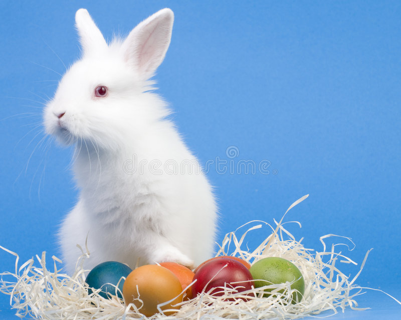 Download Happy Easter Stock Photography - Image: 8618172