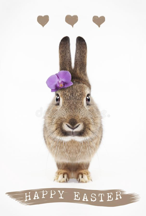Happy easter bunny with flower stock photos