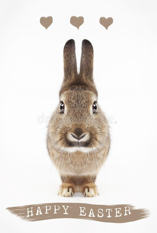 Happy Easter bunny stock photo