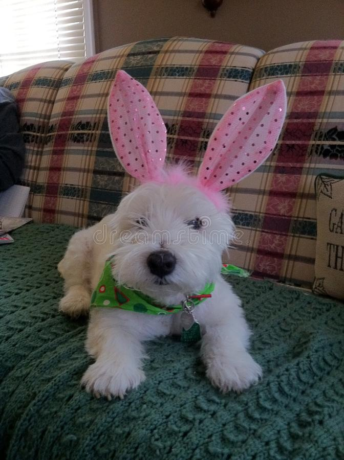 Happy Easter bunny. My dog thinks she is a Easter stock photo