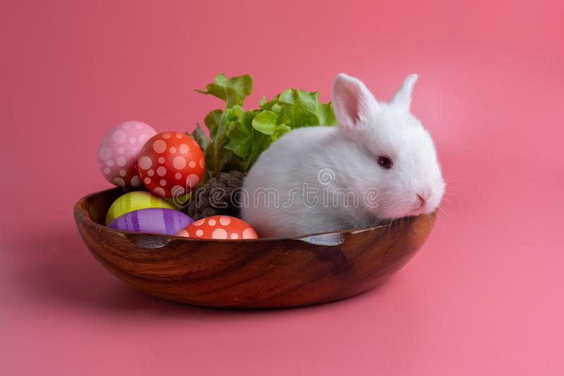 Happy Easter Day. White bunny on pink background. Rabbit with colorful Easter eggs in a wooden tray decorated with vegetables. Cut royalty free stock image