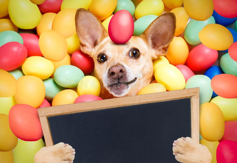Happy easter dog with eggs stock image