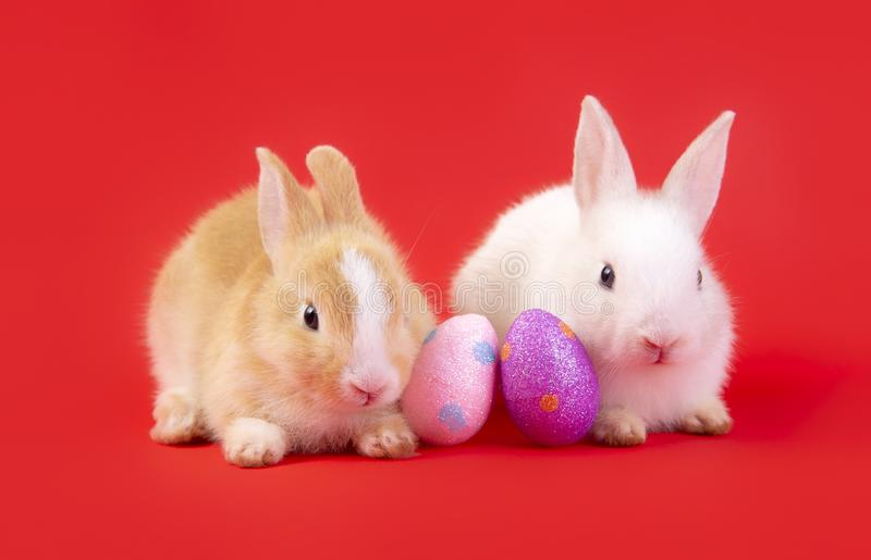 Happy easter eggs collection, Cute White rabbit bunny and brown rabbit bunny in basket and eggs paint red background royalty free stock photos