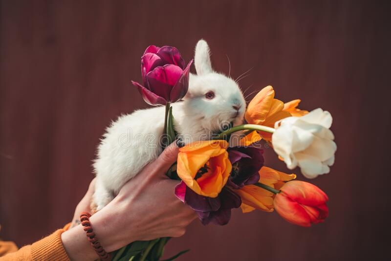 Happy easter and funny Easter day. Cute bunny. Easter bunny rabbit. Holding cute fluffy Bunny. Copy space. Happy easter and funny Easter day. Cute bunny. Easter stock photography