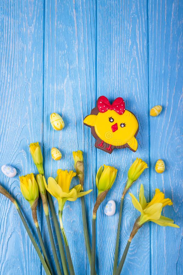 Happy Easter. Spring flowers yellow daffodils, easter eggs and gingerbread chicken on a blue background. Top view, free space royalty free stock images