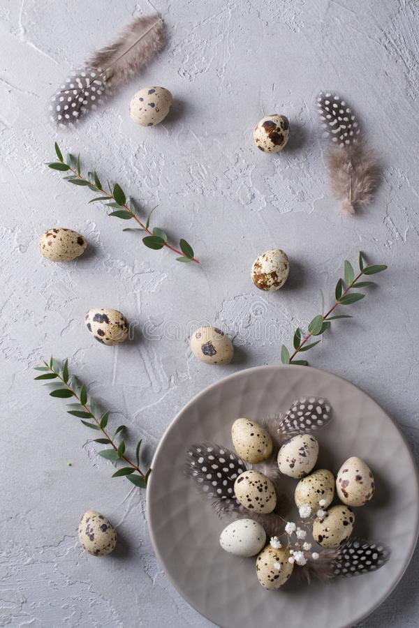 Happy Easter or spring greeting card pattern. made of quail eggs and leaf sprigs of eucalyptus. On a gray concrete background. Flat lay royalty free stock photos