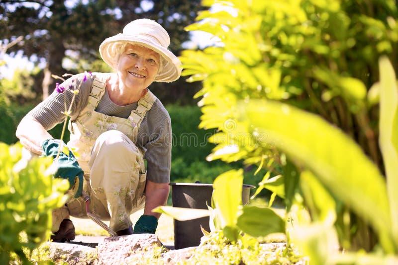 Happy elder woman working in her garden stock photos