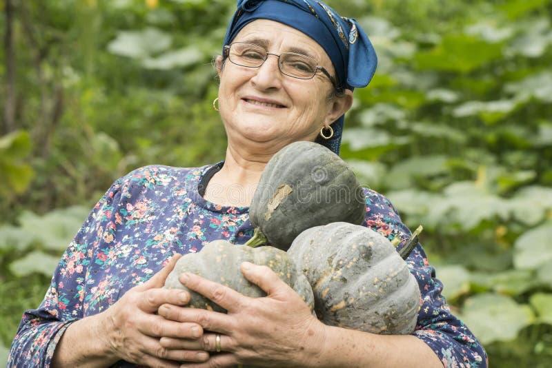 Happy elderly woman farmer portrait holding pumpkins in hands at stock photo