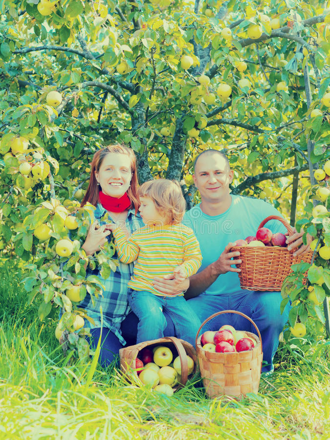 Happy family with apple harvest. In orchard stock image
