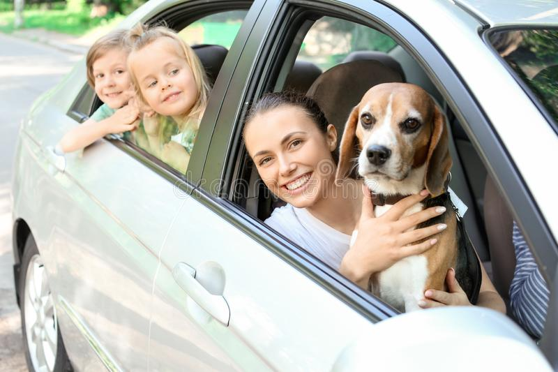 Happy family with cute dog sitting in car royalty free stock images