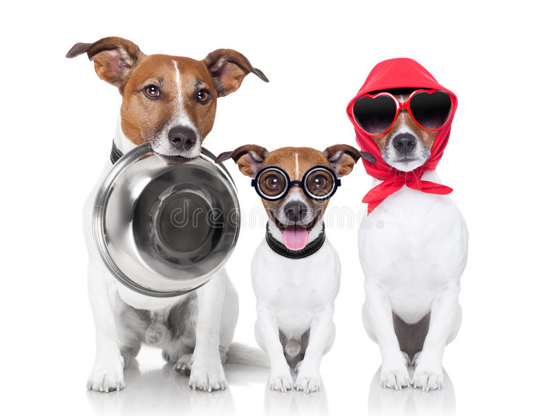 Happy family of dogs stock photo