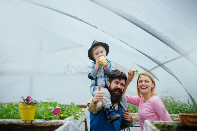 Happy family in greenhouse. Father in blue vest holding his son on shoulders. Cute kid in hat eating apple while his mom stock image