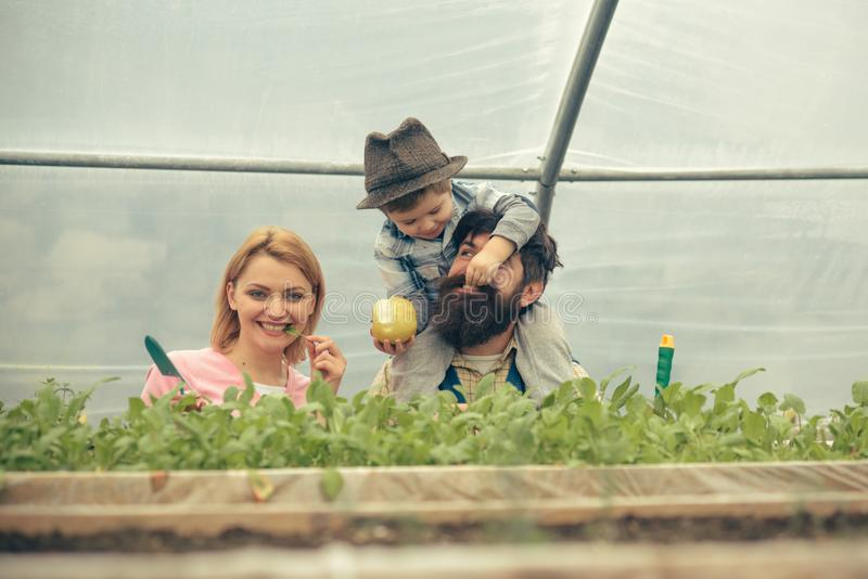 Happy family in greenhouse. Mum posing with green leaf in her mouth while kid is feeding dad with apple sitted on his stock photography