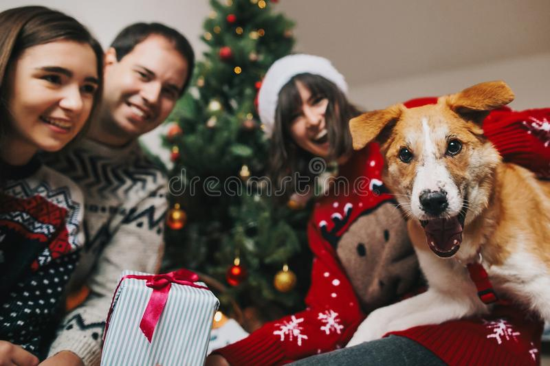 Happy family having fun with gift and funny dog at christmas tree. emotional moments. merry christmas and happy new year. Concept, seasonal greetings. happy royalty free stock photography