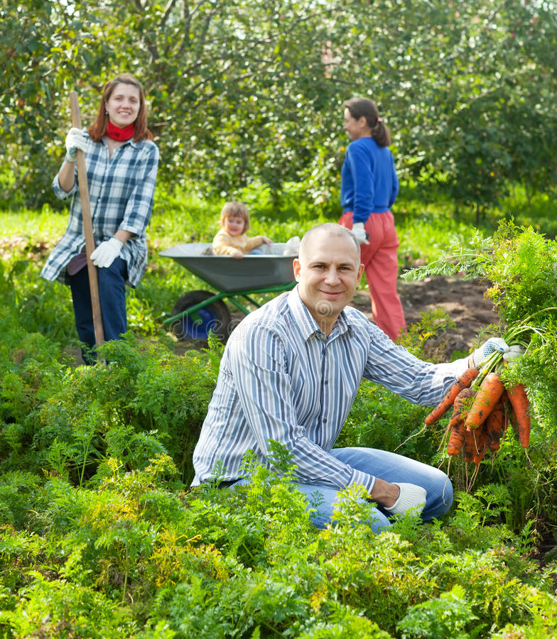 Happy family is picking carrots
