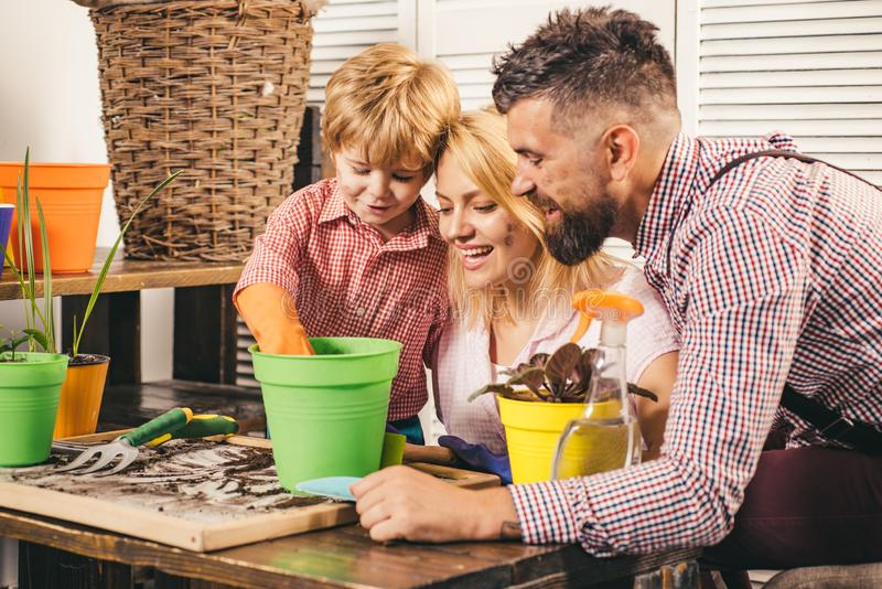 Happy family planting sprout in a plant pot. Little cute boy helps his parents. Teamwork and family togetherness concept royalty free stock photography