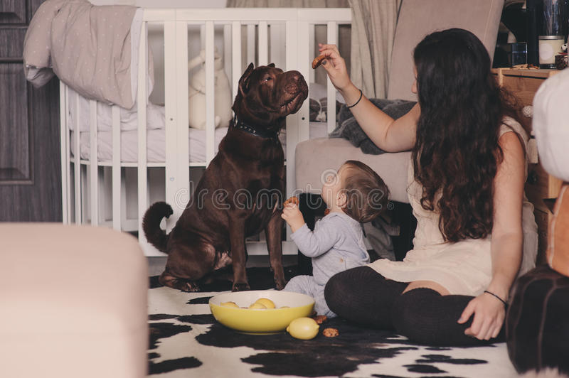 Happy family playing at home with dog. Mother and baby boy eating cookies. And spending time together stock photo