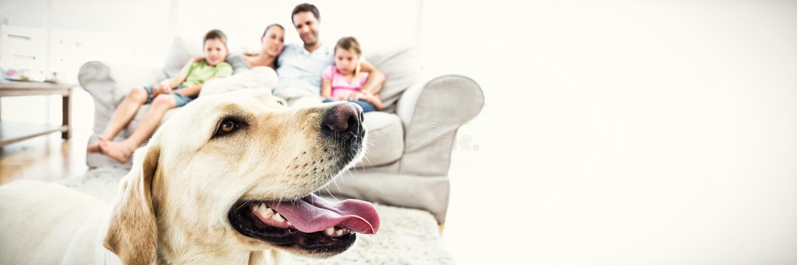 Happy family sitting on couch with their pet yellow labrador in foreground stock photos